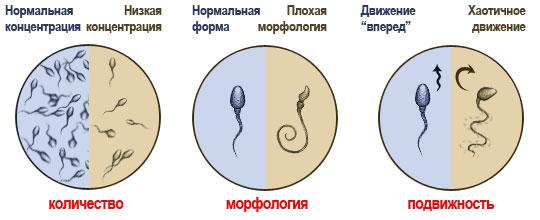 Как Повысить Активность Спермы
